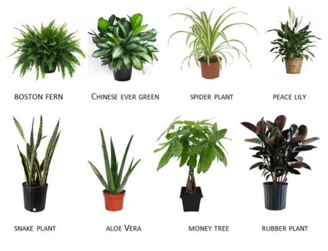 Clean Air Plant Guide