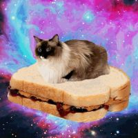 Tim Elfenbein (represented by a cat sitting on a sandwich floating in space)